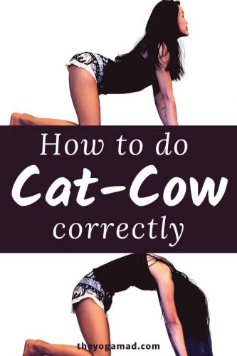 Cat Cow Pose