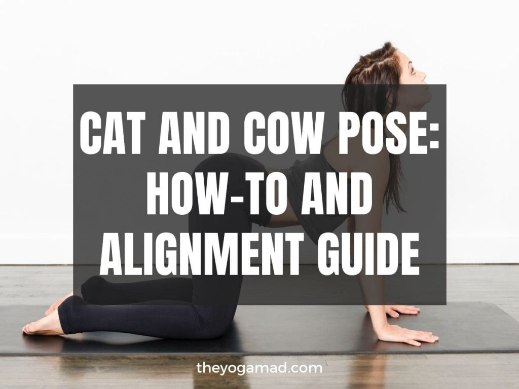 Read more about the article How to Do Cat-Cow Pose Correctly (Video Tutorial Inside)