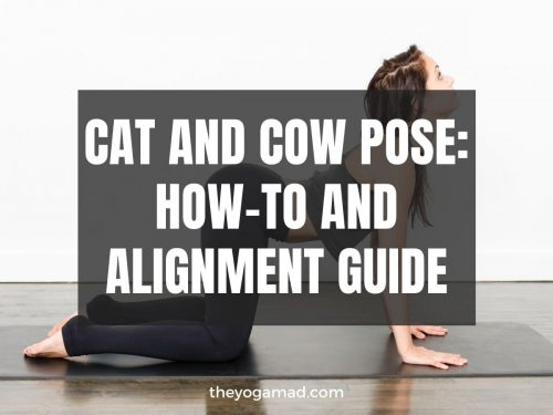 How to Do Cat-Cow Pose Correctly (Video Tutorial Inside)